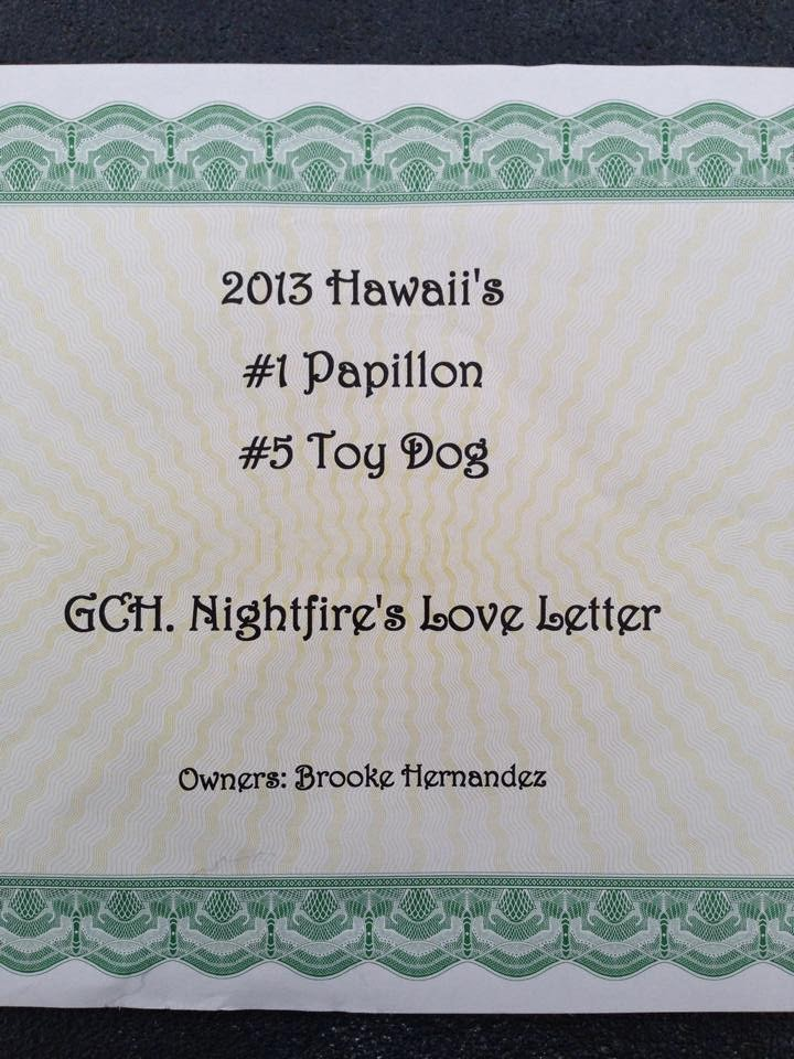 Am Grandch.AOM Nightfire's Love Letter officially No.1 papillon in Hawaii 2013!